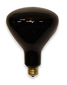 Giant Spotlight Bulb