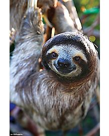 Smiling Sloth Poster